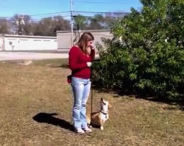 dog training st petersburg fl
