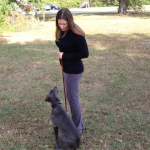 dog training st petersburg fl